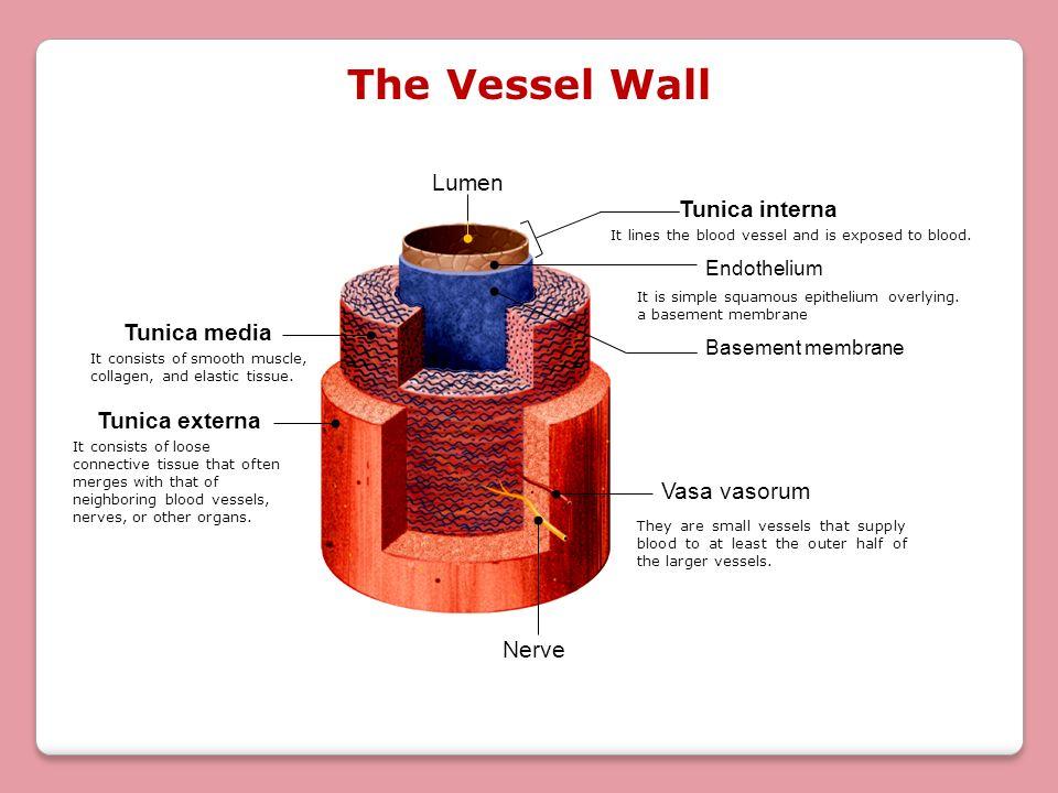 Lab # 3 Blood Vessels Anatomy. - ppt video online download