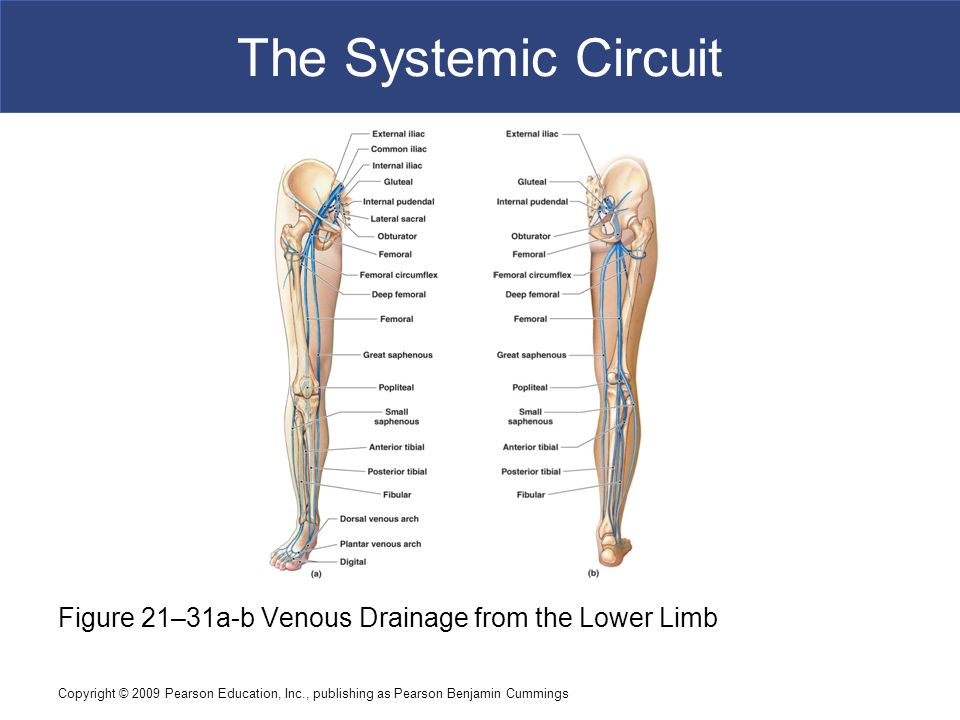21 Blood Vessels and Circulation C h a p t e r - ppt video online ...