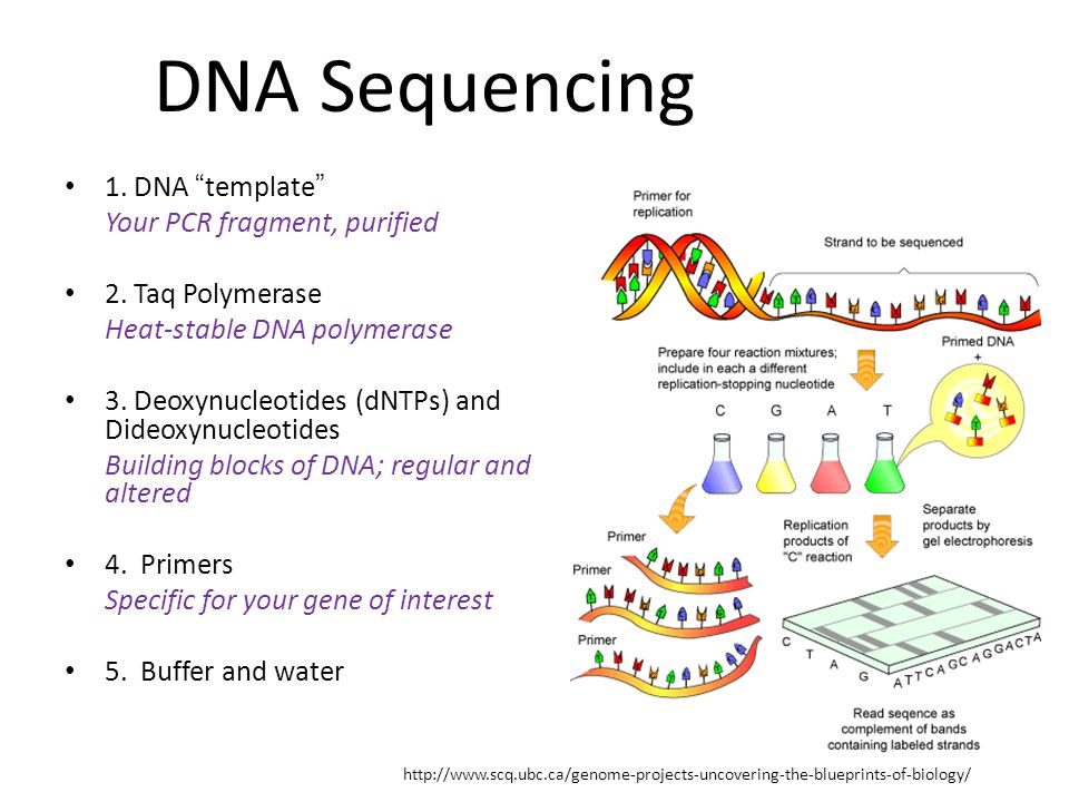 how much template dna for pcr - atemberaubend pcr dna vorlage fotos entry level resume