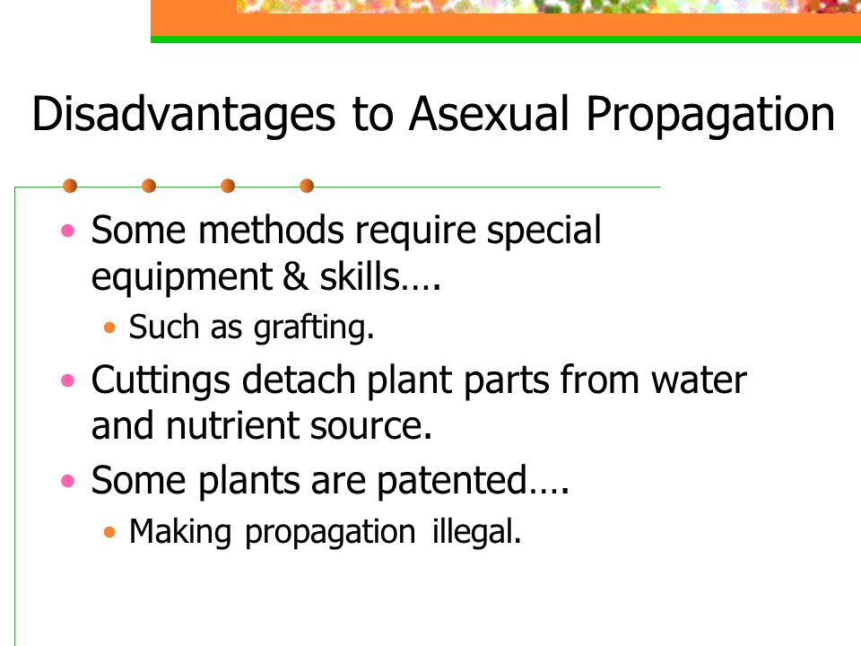 Which is a disadvantage of asexual reproduction
