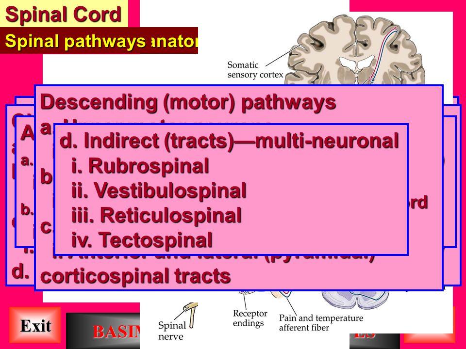 Central Nervous System BASIM ZWAIN LECTURE NOTES - ppt download