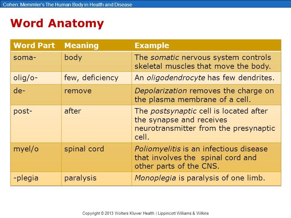 Famoso Anatomy Word Parts Foto - Anatomía de Las Imágenesdel Cuerpo ...