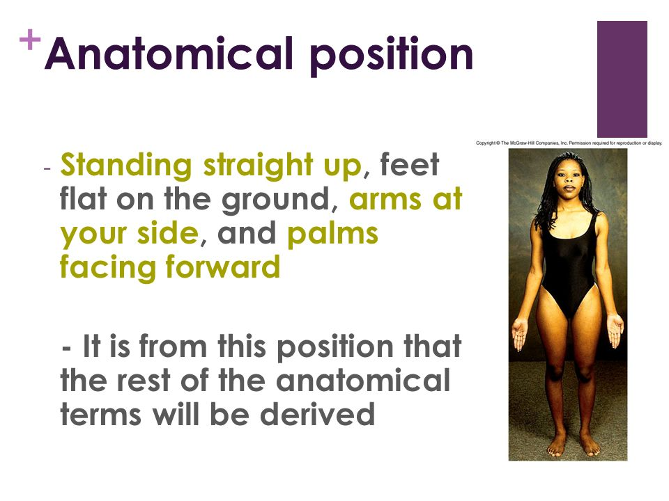 Unit 1: Intro to Anatomy Chapter ppt video online download