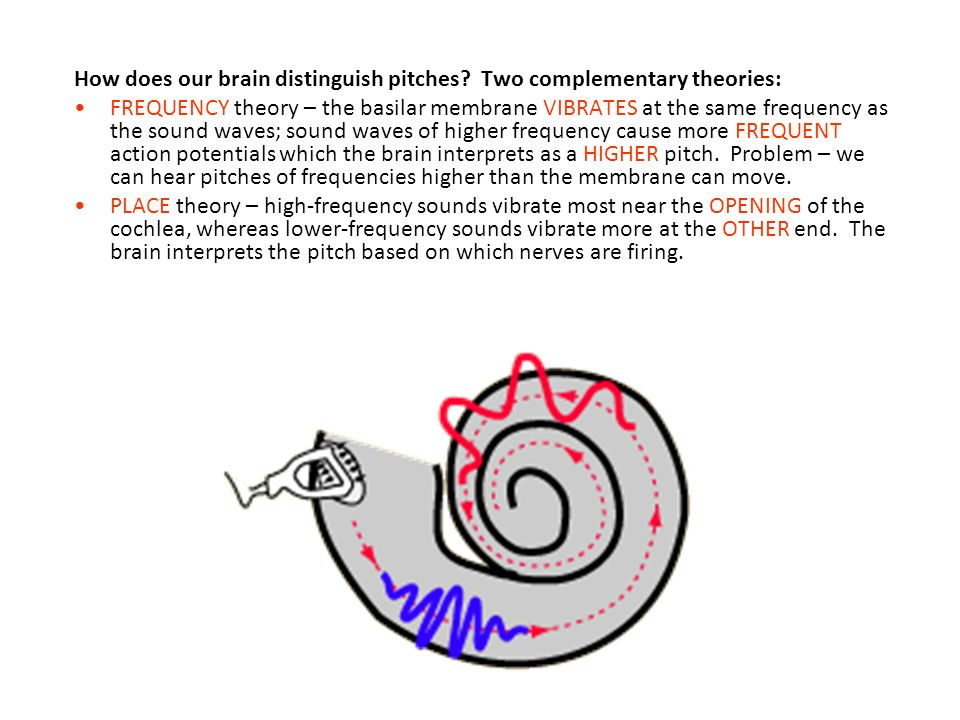 Hearing Review The Sense Of Hearing Is Also Known As The Auditory