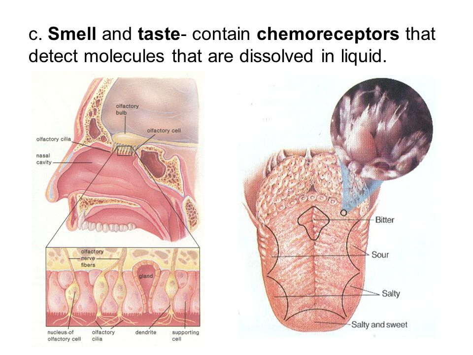 c. Smell and taste- contain chemoreceptors that detect molecules that are dissolved in liquid.