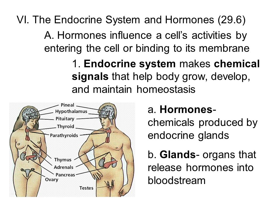 VI. The Endocrine System and Hormones (29.6)