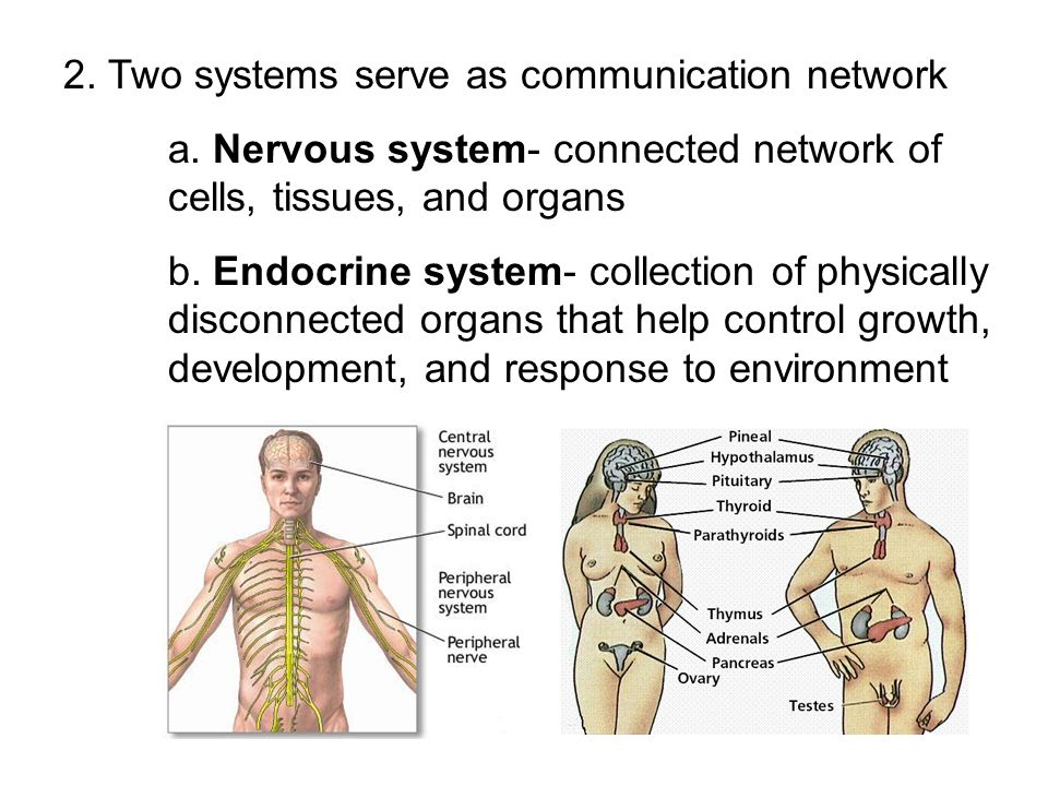2. Two systems serve as communication network