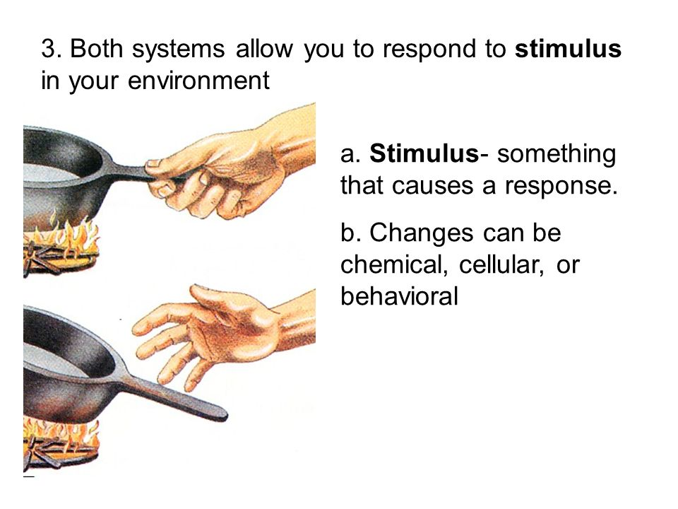 3. Both systems allow you to respond to stimulus in your environment