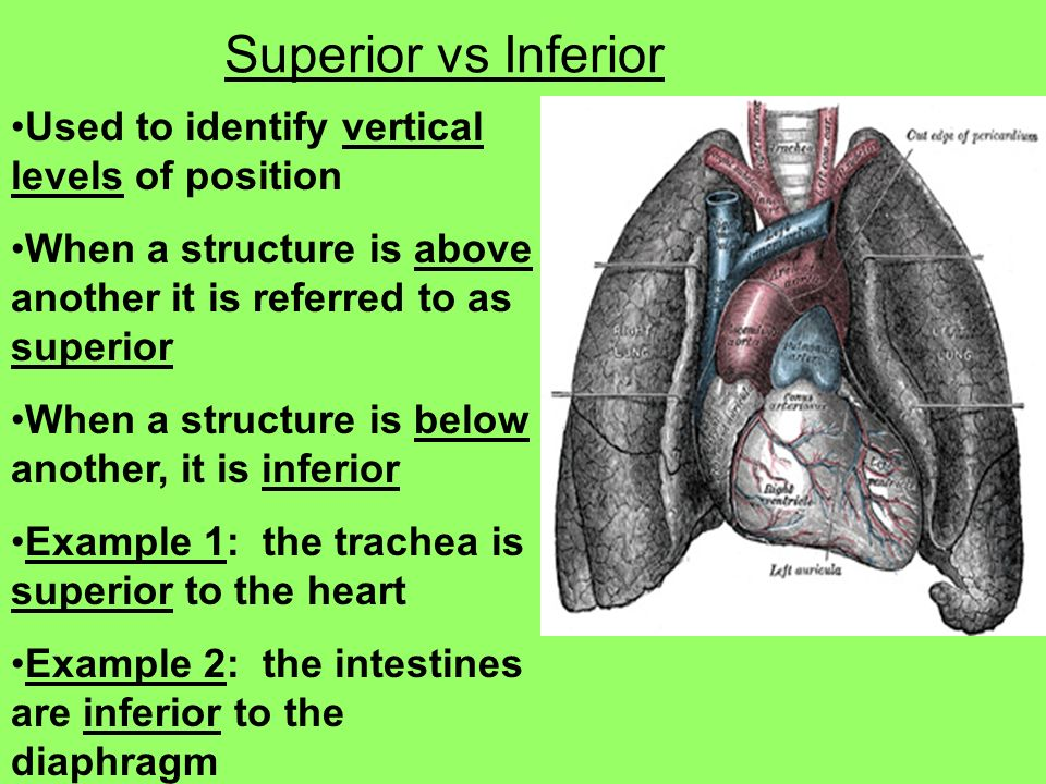 The Language of Anatomy - ppt video online download