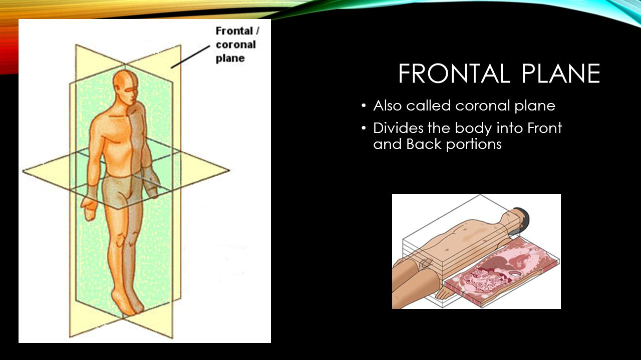 Frontal Plane Also called coronal plane