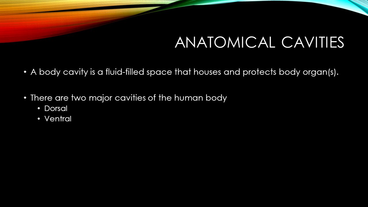 Anatomical Cavities A body cavity is a fluid-filled space that houses and protects body organ(s). There are two major cavities of the human body.
