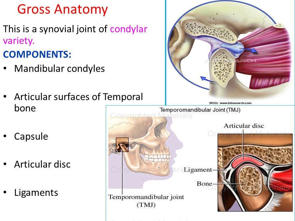TMJ and Muscles of Mastication - ppt video online download