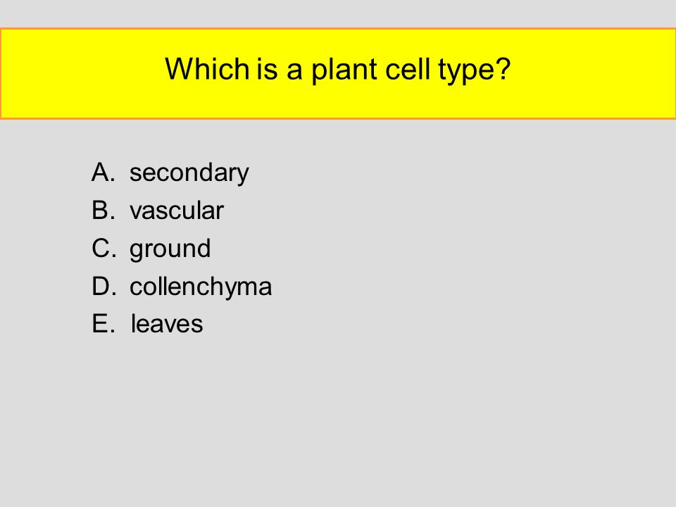 Which is a plant cell type