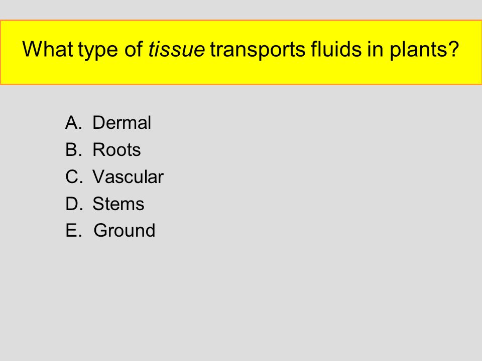What type of tissue transports fluids in plants