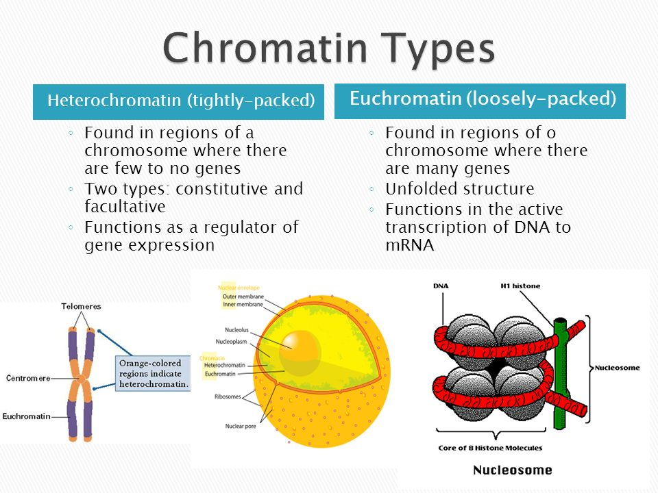 structure of chromatin ppt video online download  5 chromatin
