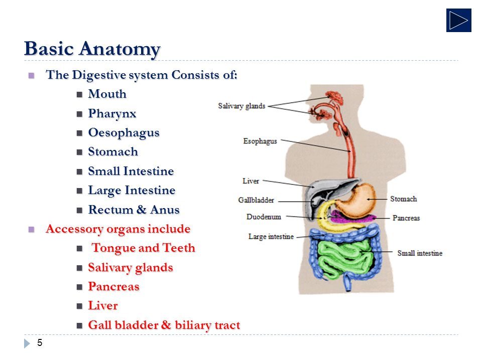 Fluoroscopic Investigations Of The Gastrointestinal Tract - ppt ...