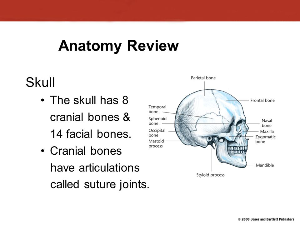 Injuries to: The Head, Neck and Face - ppt video online download