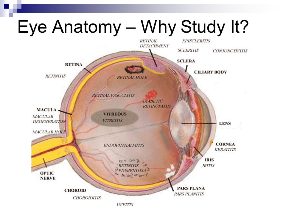 Assessment of Eyes and Ears - ppt video online download