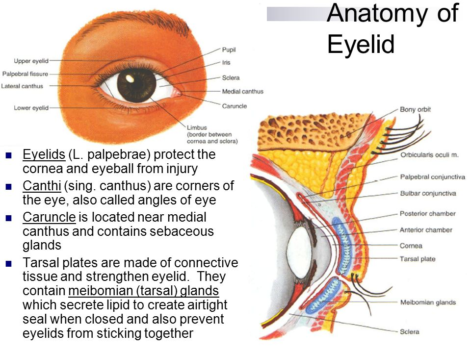 Assessment Of Eyes And Ears Ppt Video Online Download