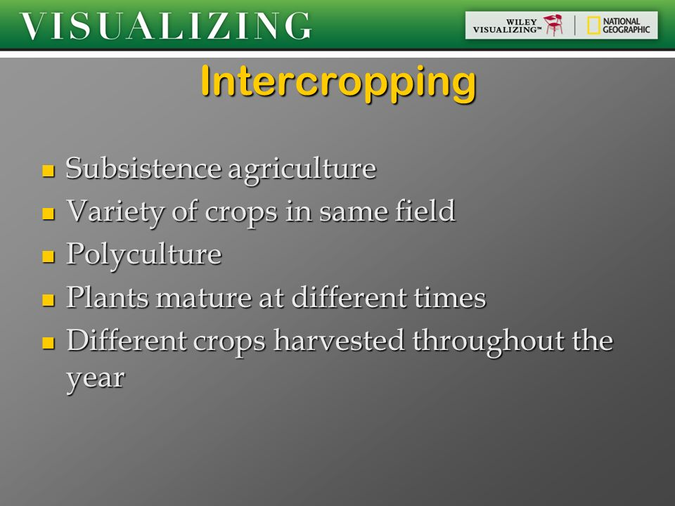 Intercropping Subsistence agriculture Variety of crops in same field