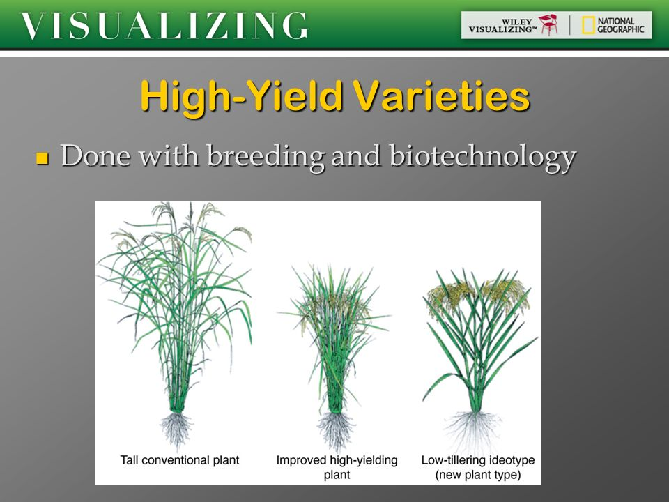 High-Yield Varieties Done with breeding and biotechnology