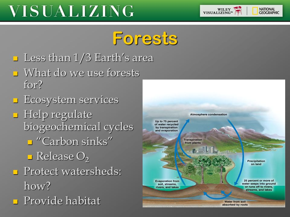 Forests Less than 1/3 Earth's area What do we use forests for