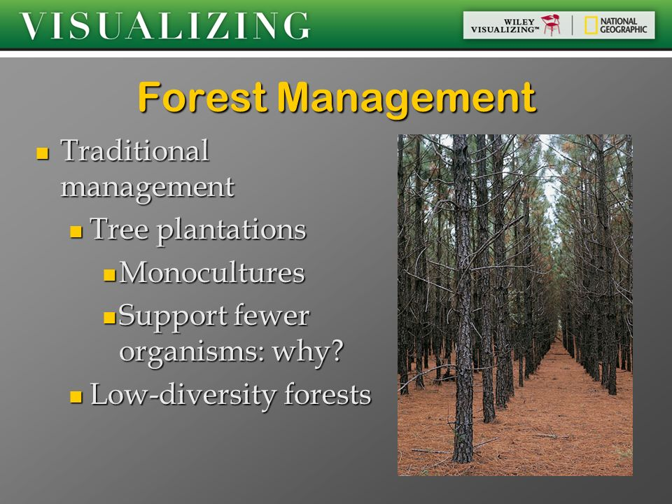 Forest Management Traditional management Tree plantations Monocultures