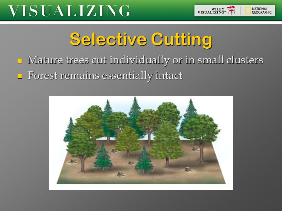Selective Cutting Mature trees cut individually or in small clusters