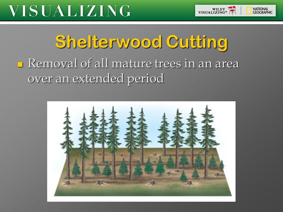 Shelterwood Cutting Removal of all mature trees in an area over an extended period