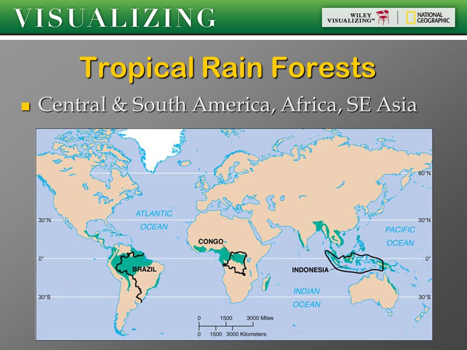 Tropical Rain Forests Central & South America, Africa, SE Asia