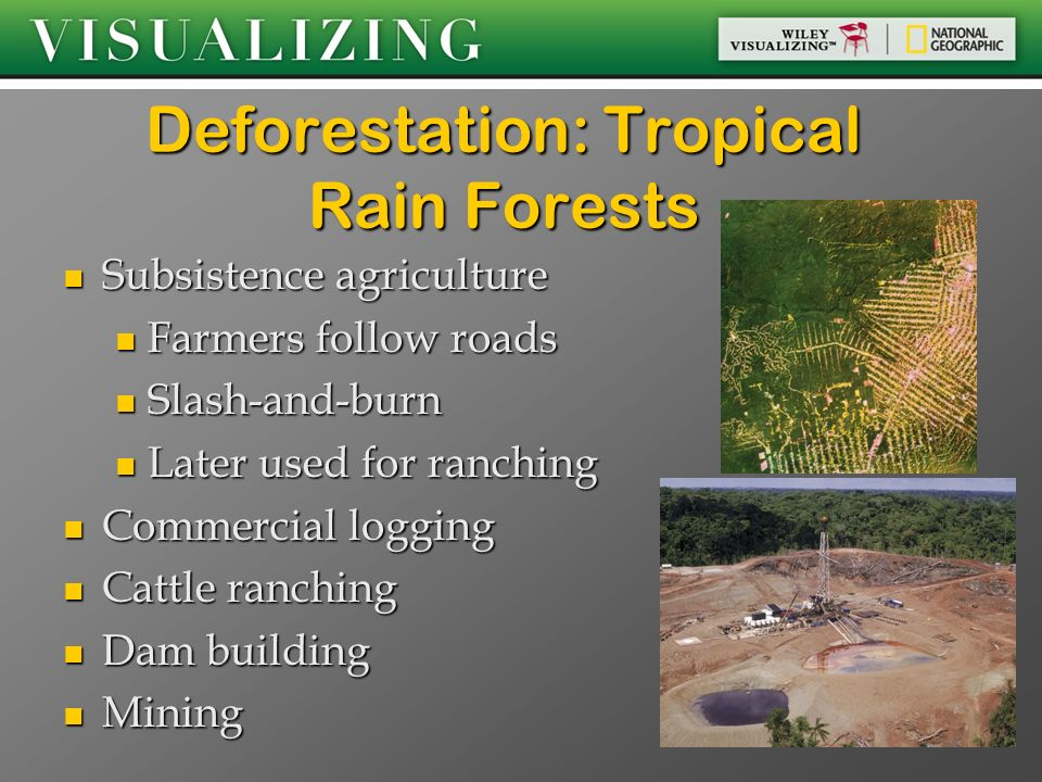 Deforestation: Tropical Rain Forests