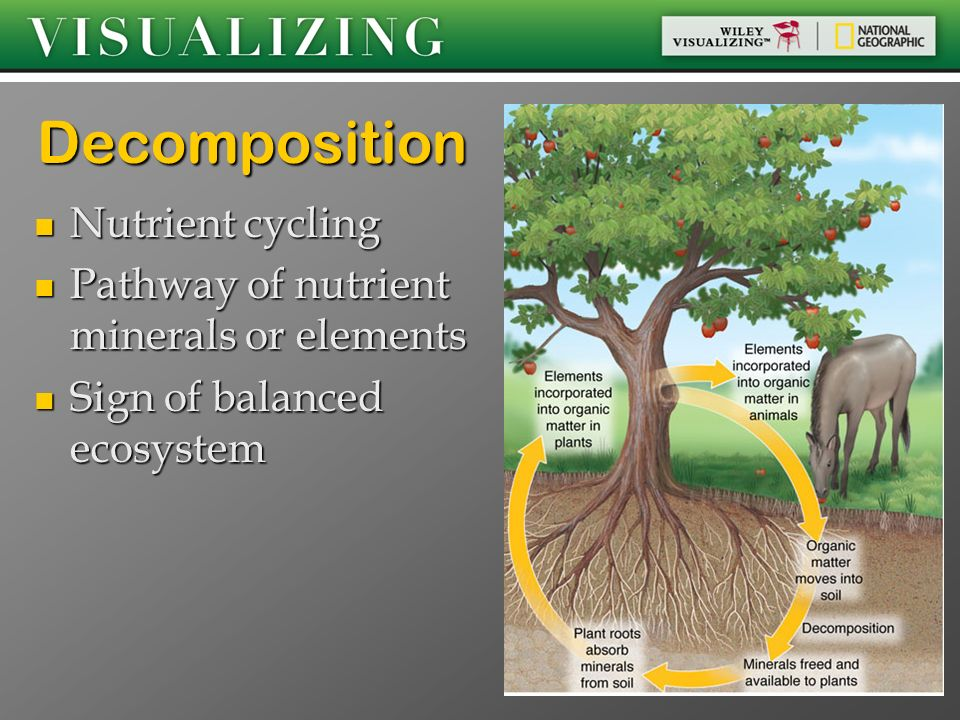 Decomposition Nutrient cycling