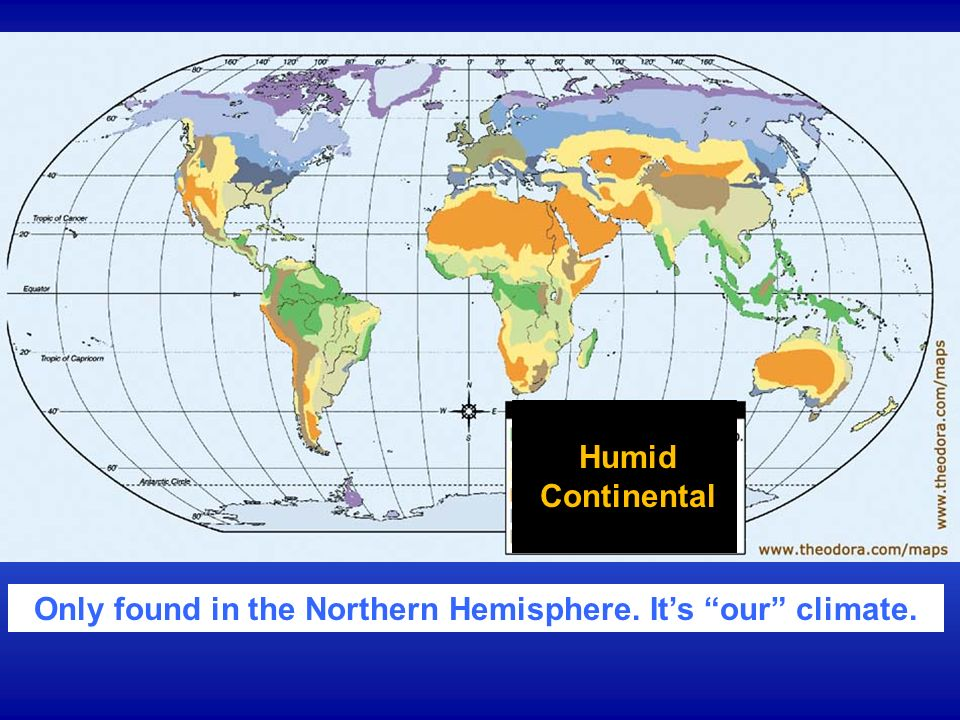 Only found in the Northern Hemisphere. It's our climate.