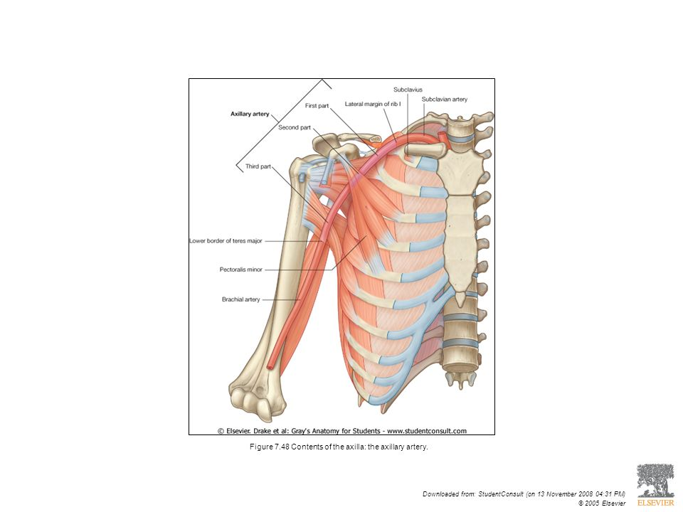 Dr Sara Soleimani Asl Department Of Anatomy Hums Ppt Video
