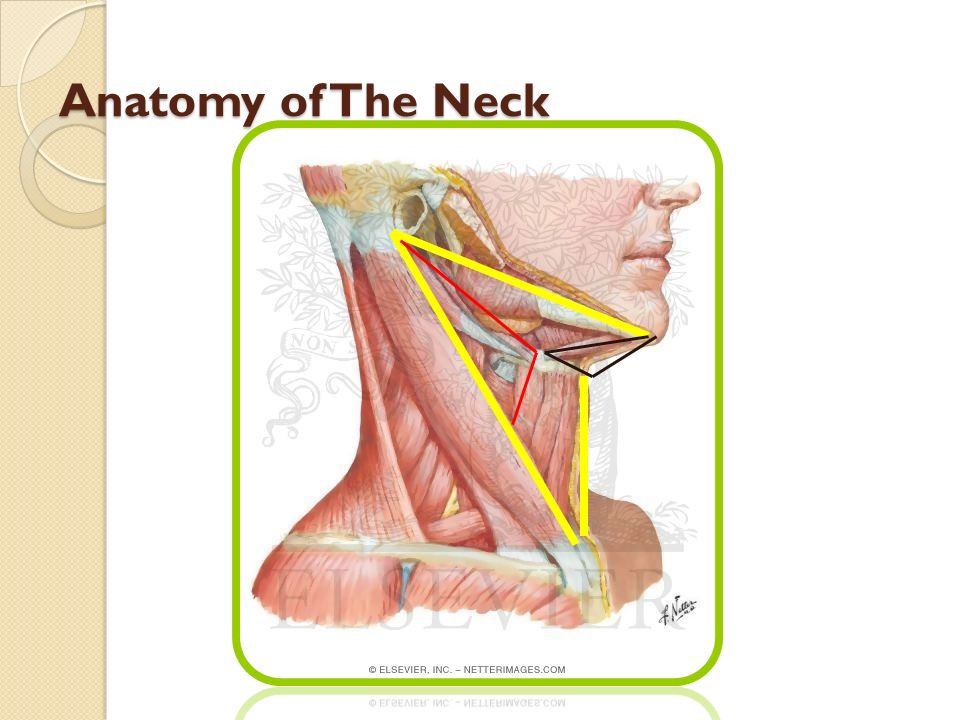 LATERAL NECK MASSES Prof. Alam - ppt video online download