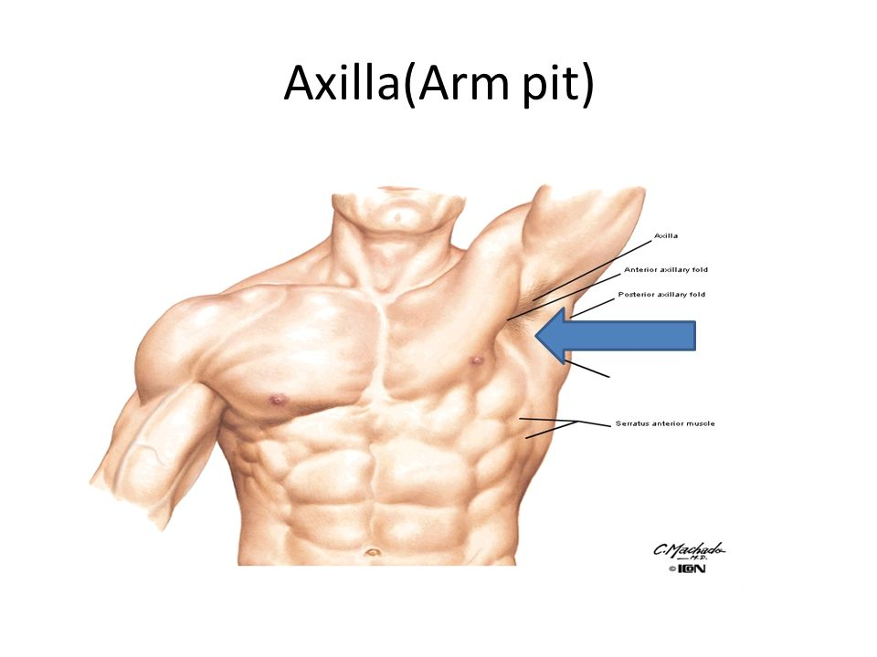 Anatomy Of The Axilla Dr Rania Gabr Ppt Video Online Download