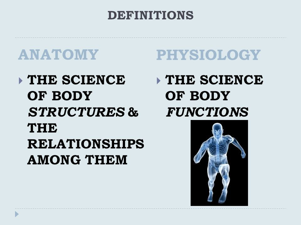 Anatomy & Physiology Chapter 1 Section 1 - ppt video online download