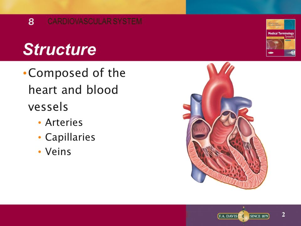 8 Lecture Notes Cardiovascular System Ppt Video Online Download