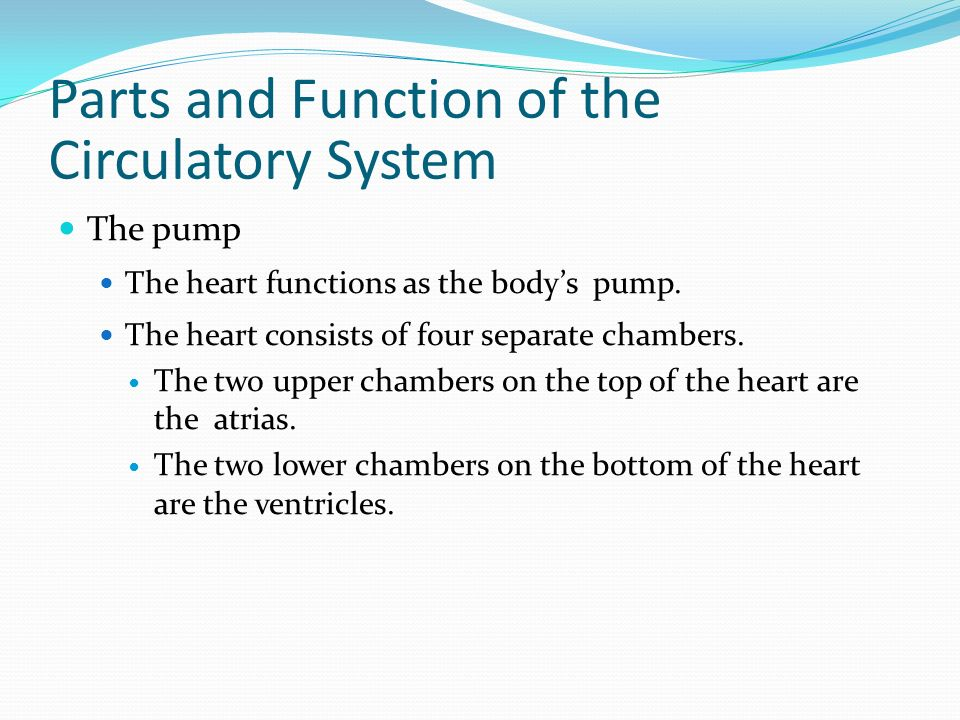 Parts and Function of the Circulatory System