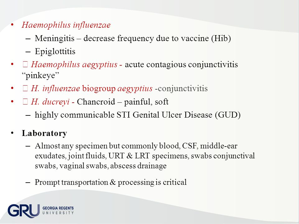 REVIEW of Clinical Microbiology Part II - ppt download