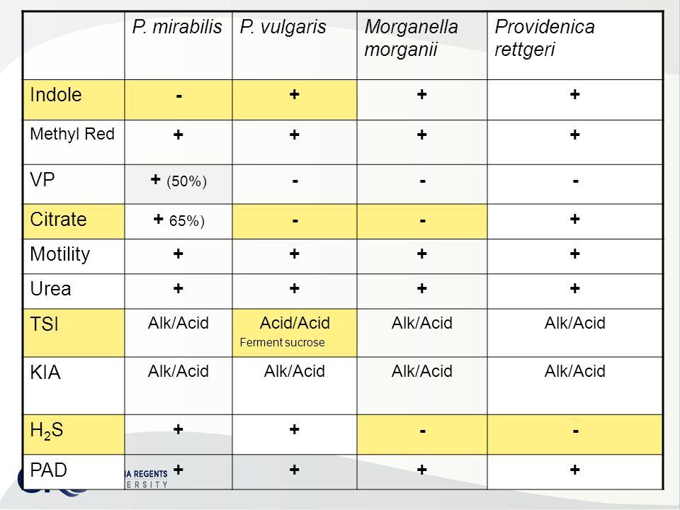 morganella morganii arrangement