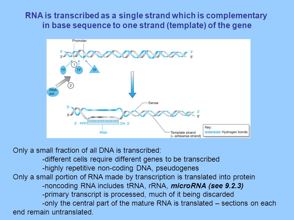 Pharmacogenomics And Molecular Pharmacology Ppt Video Online Download