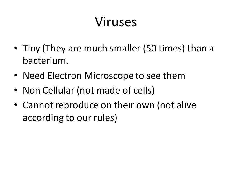 what is bacterial virus definition