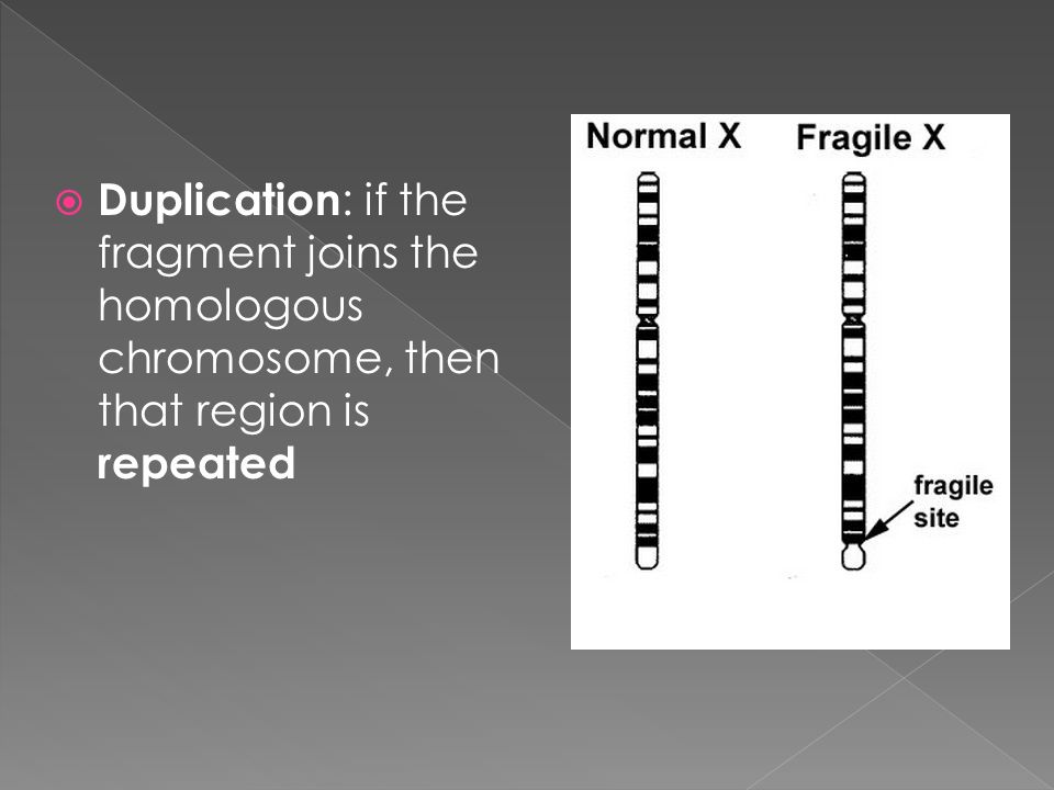 Duplication: if the fragment joins the homologous chromosome, then that region is repeated