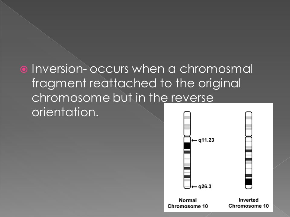 Inversion- occurs when a chromosmal fragment reattached to the original chromosome but in the reverse orientation.