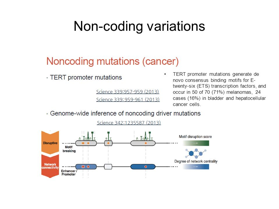 Noncoding Mutations Contribute To >> Genome Wide Analysis Of Noncoding Regulatory Mutations In Cancer