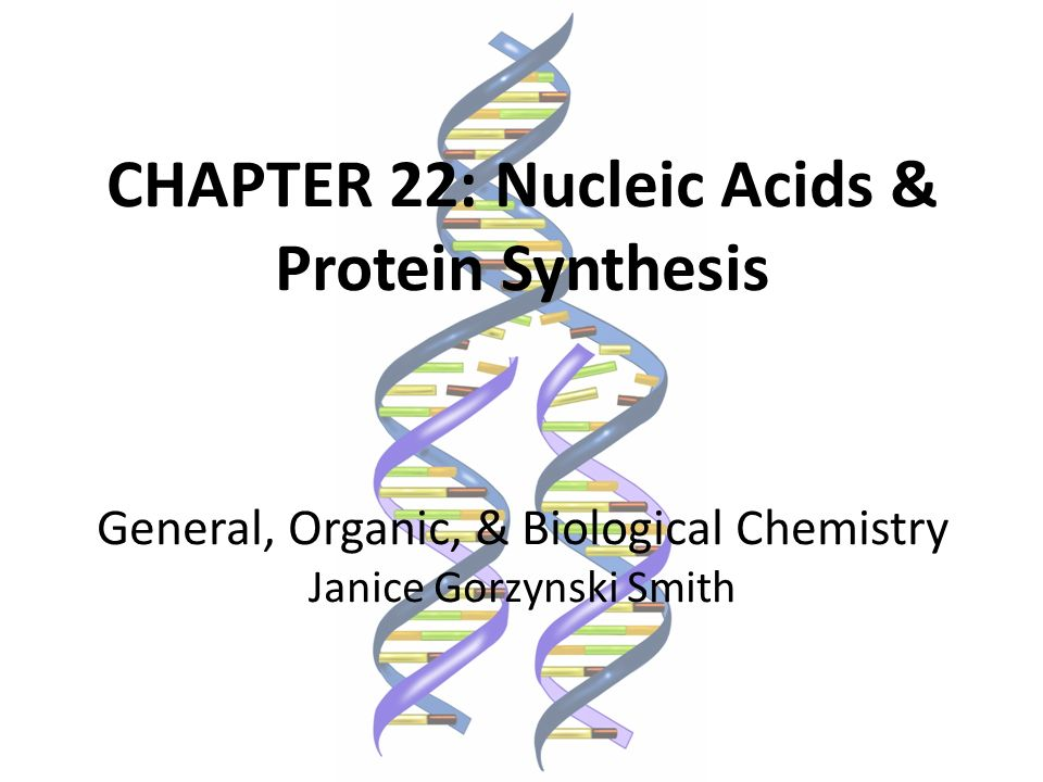 CHAPTER 22: Nucleic Acids & Protein Synthesis - ppt download