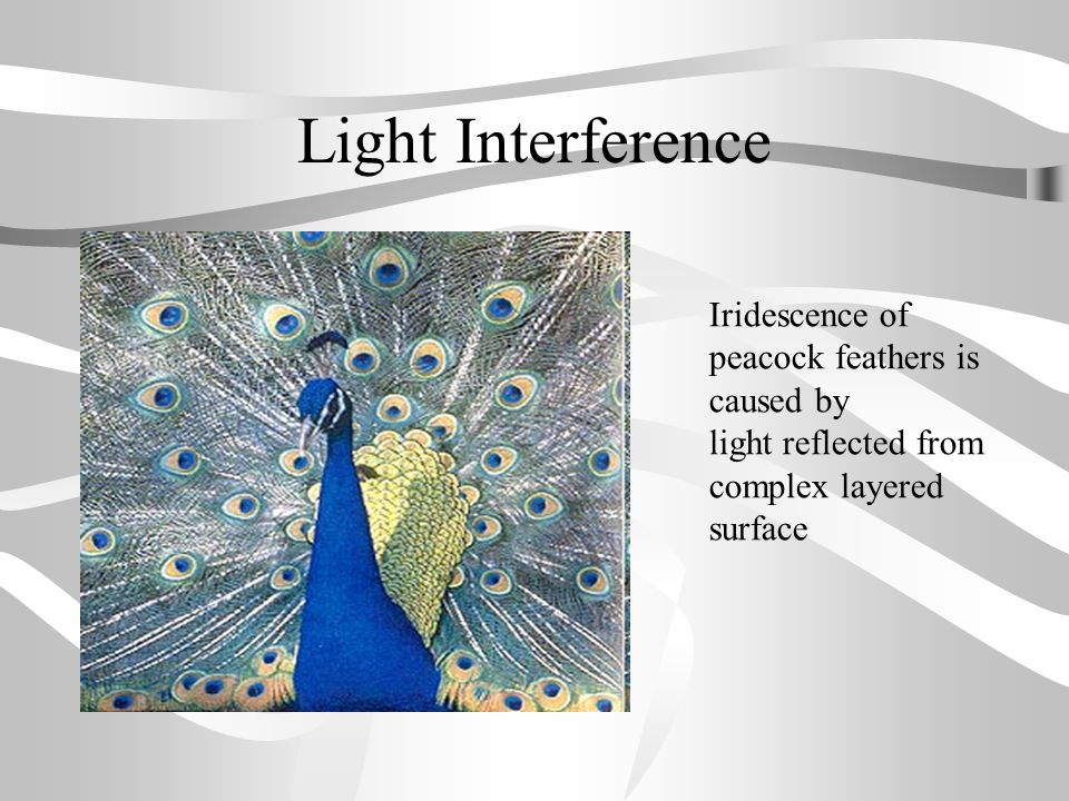 Light Interference Iridescence of peacock feathers is caused by light reflected from complex layered surface.