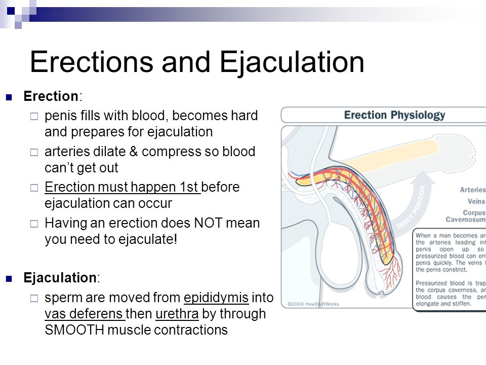 do you need an erection to ejaculate