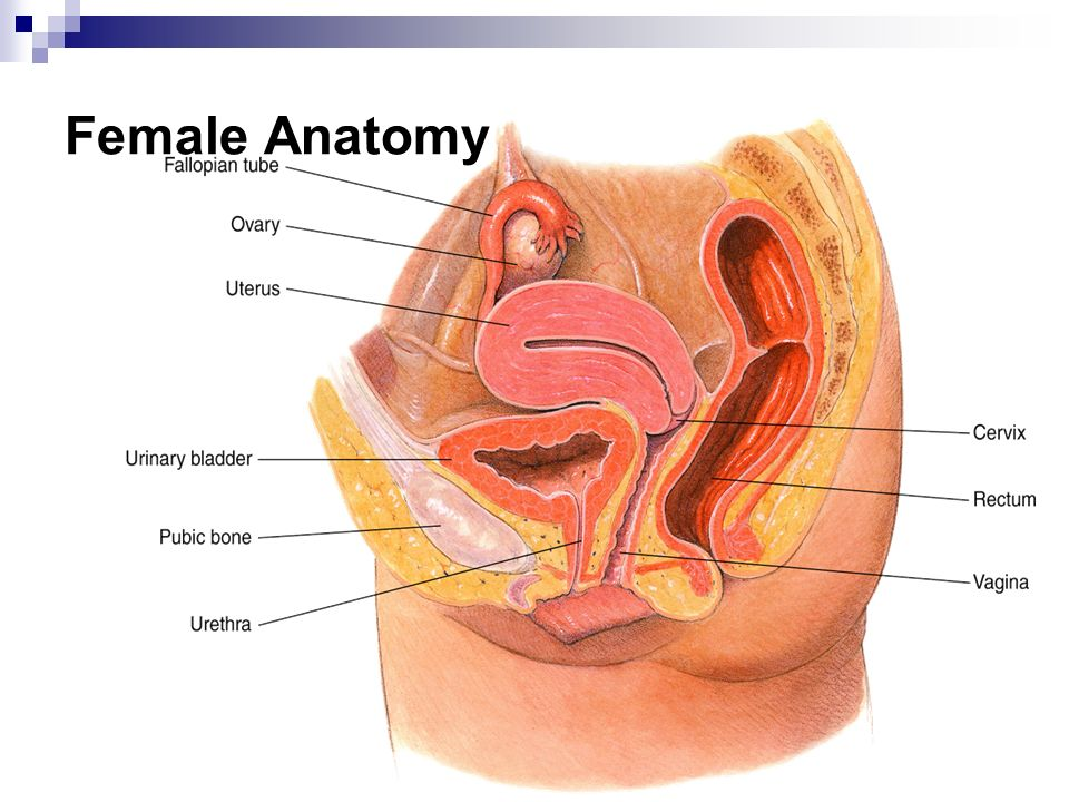 Anatomy And Physiology Of Sex Ppt Video Online Download